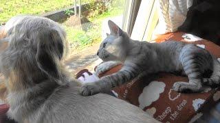 Download 野良猫親子&子猫ろく 冷え込む朝の猫ハウス  Winter Morning Video