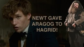 Download Fantastic Beasts Theory: Newt Scamander gave Aragog to Hagrid! Video