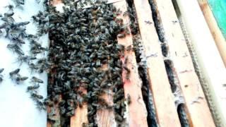 Download Зимовка пчел в январе 2017 Video