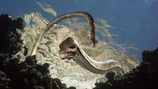 Download Морские динозавры. Документальные фильмы. National Geographic Channel TV. Video