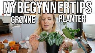 Download GRØNNE PLANTER | Tips for NYBEGYNNERE Video