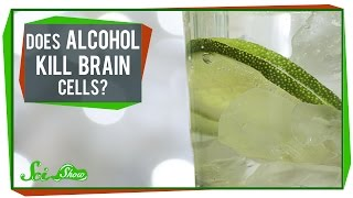 Download Does Alcohol Kill Brain Cells? Video