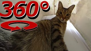 Download 360 Degree Cat Video - The Cat's In the Bag - Full Version Video