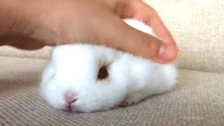 Download Rabbit - A Funny And Cute Bunny Videos Compilation || NEW HD Video