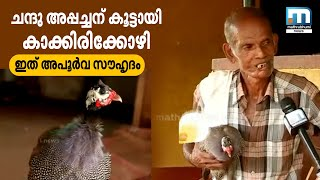 Download Special friendship between a man and a guinea hen Video