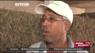 Download W. Sahara farmers create cheaper, organic animal feed Video