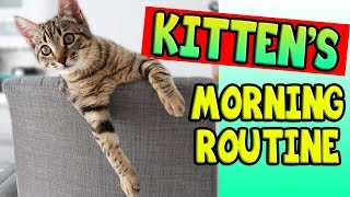 Download KITTEN'S MORNING ROUTINE! Video