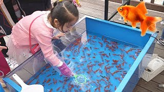 Download 진짜 금붕어를 잡았어요!! 서은이의 핑크퐁 아기상어 낚시놀이 물고기 잡기 솜사탕 Catch Real Fish with Pinkfong Fishing Toys Video