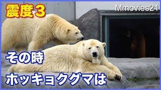 Download 地震に驚いて起きるララ その時ホッキョクグマ館周辺では Polar Bear surprised by the earthquake Video