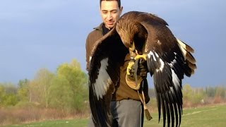 Download Hunting with a Golden Eagle - Amazing short movie Video