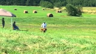Download AKC Retriever field trial Video