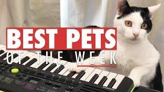 Download Best Pets of the Week | October 2017 Week 1 Video