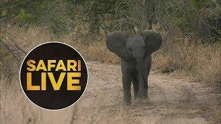 Download safariLIVE - Sunset Safari - July 9, 2018 Video
