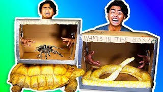 Download WHAT'S IN THE BOX CHALLENGE! ~ Giant Snake, Tortoise, Scorpions, Lizard Video