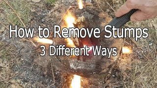 Download How to Remove Stumps Three Different Ways Video