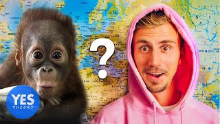 Download Letting a Monkey Decide which Country we Fly to... Video