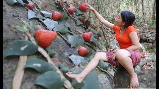 Download Survival skills Find strawberry fruit Natural for food eating delicious Video