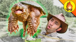 Download RESPECT the SNAPPER...Turtles can be Dangerous! Video