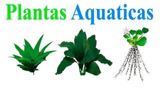 Download Plantas aquaticas Video