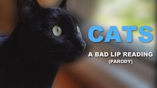Download ″CATS″ — A Bad Lip Reading (Parody) Video