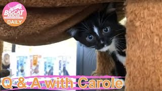 Download Happy Busy Kittens Everywhere! What Fun! Video