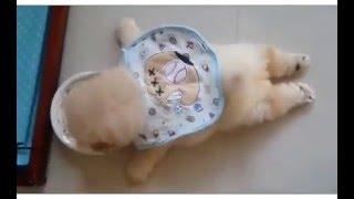 Download 여러가지 재미나고 귀여운 강아지들 영상 part.1 Video