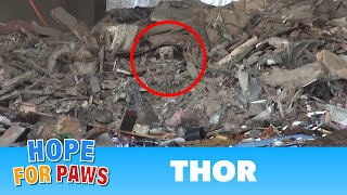 Download A scared homeless pit bull is found hiding deep in a trash heap. Please share his rescue video. Video