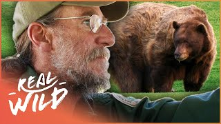 Download Breaking And Entering: Will These Bears Ever Learn!? | The Bear Whisperer Video