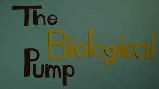 Download The Biological Pump Video