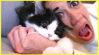 Download MY CAT ATTACKED ME! Video