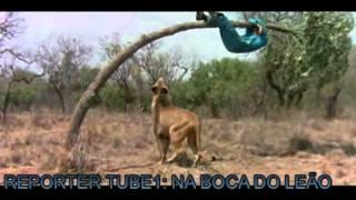 Download na boca do leão 2.mp4 Video