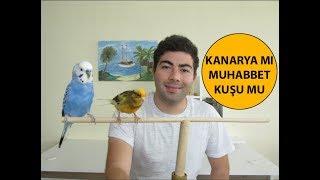 Download Muhabbet Kuşu mu Kanarya mı Video
