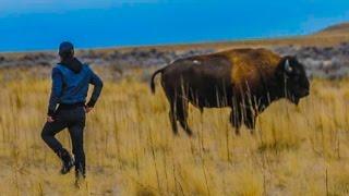 Download RIDING A WILD BISON! (INCREDIBLY DANGEROUS!!!) w/ Shonduras, Corey Scherer, Sam & Colby! Video