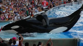 Download Why Is Seaworld Being Silent About This...!? Video