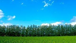 Download [HD]北海道ガーデン街道 7つのガーデン名所を紹介 Hokkaido Garden Road 花の名所案内 Flowers Garden Video