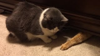 Download Cats Stealing Stuff - Compilation Video