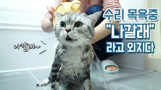 Download ″나갈래″ 말하는 고양이 수리 목욕하다 Video