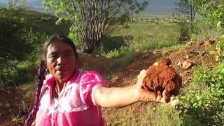 Download Como Hacer una Olla en San Marcos Tlapazola Video