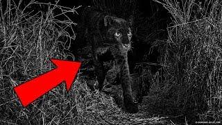 Download 7 Believed Extinct Animals Still Alive Video