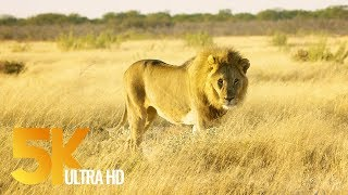Download 5K African Wildlife Documentary Film - Etosha National Park, Namibia, Africa Video
