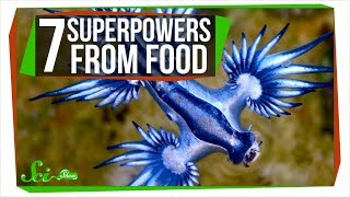 Download 7 Species That Really Are What They Eat Video