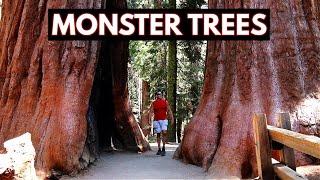 Download Sequoia National Park - Monster Trees (Vlog/Park #23) Video