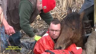 Download Dramatic horse rescue in North Smithfield, RI Video