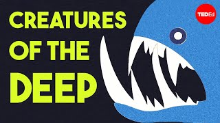 Download The otherworldly creatures in the ocean's deepest depths - Lidia Lins Video