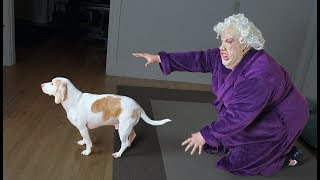 Download Dogs Make Funny Lady Mad! Funny Dogs Maymo, Penny, & Potpie Video