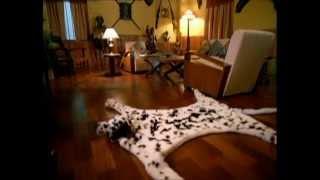 Download Bajaj Fan - Dog Tvc Video