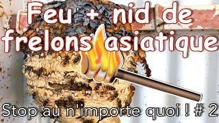 Download Feu + nid de frelons asiatique - Stop au n'importe quoi ! # 2 Video