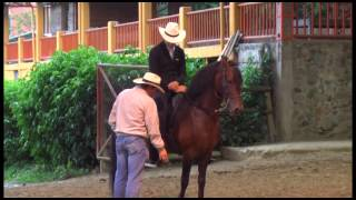 Download Sus Caballos TV Video