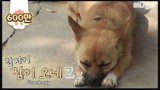 Download ″안자고 있는거 다 안다..″ 새끼 어디다 숨겼냐니까 자는척함ㅋㅋㅋ Video