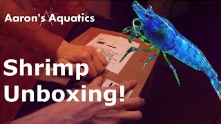 Download Shrimp Unboxing - Dream Blue Velvet & Tank Setup Video
